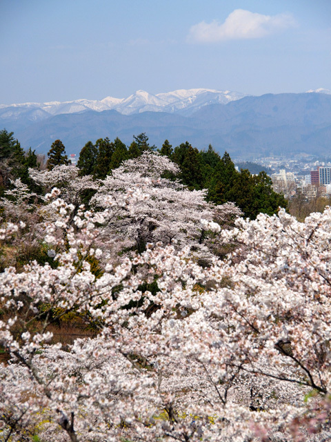 花見山公園_d0358793_02160745.jpg