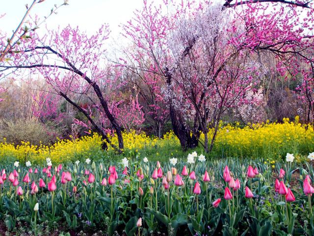 花見山公園_d0358793_02254993.jpg