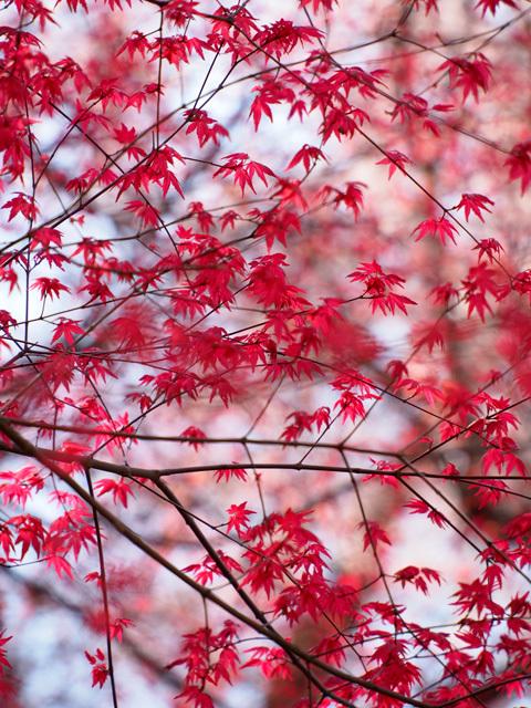 花見山公園_d0358793_02311148.jpg