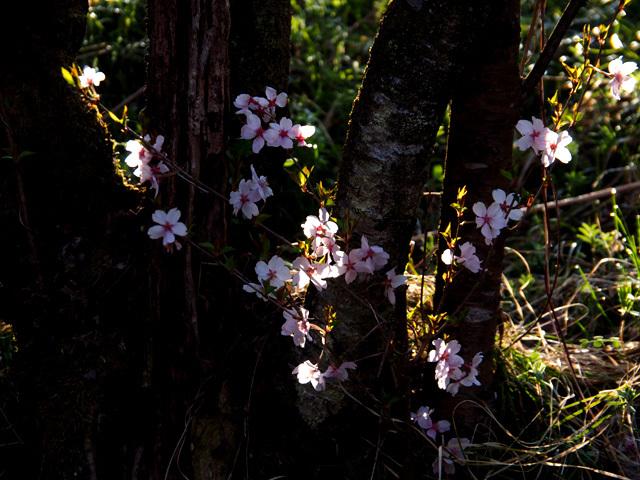 花見山公園_d0358793_02393668.jpg
