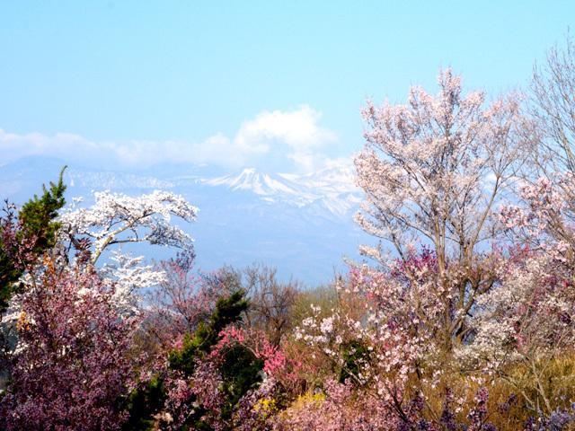 花見山公園_d0358793_03014436.jpg