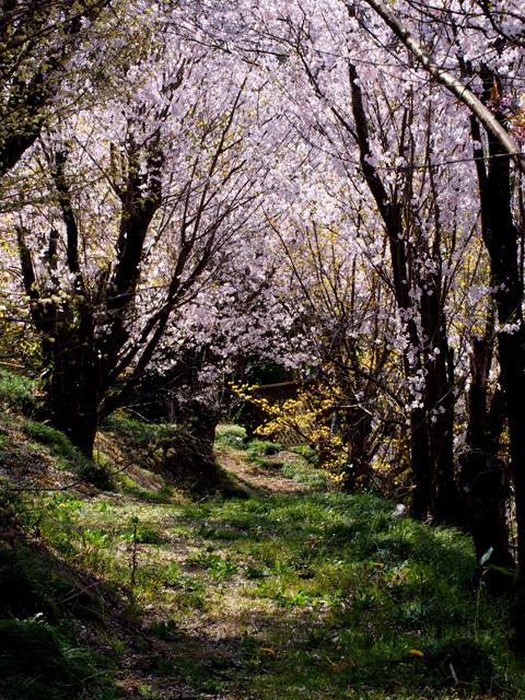 花見山公園_d0358793_03152729.jpg