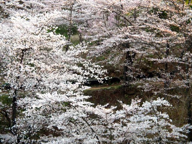 花見山公園_d0358793_04354075.jpg