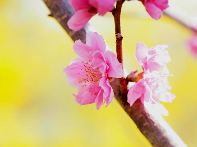 花見山公園_d0358793_04404921.jpg