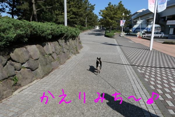f0369014_15520102.jpg