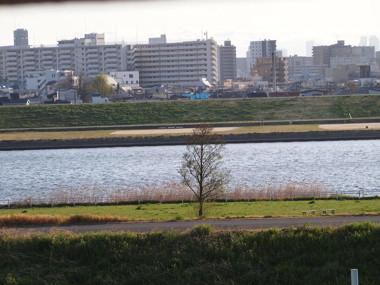 葛飾区小菅公園の春  1。_a0214329_16001084.jpg