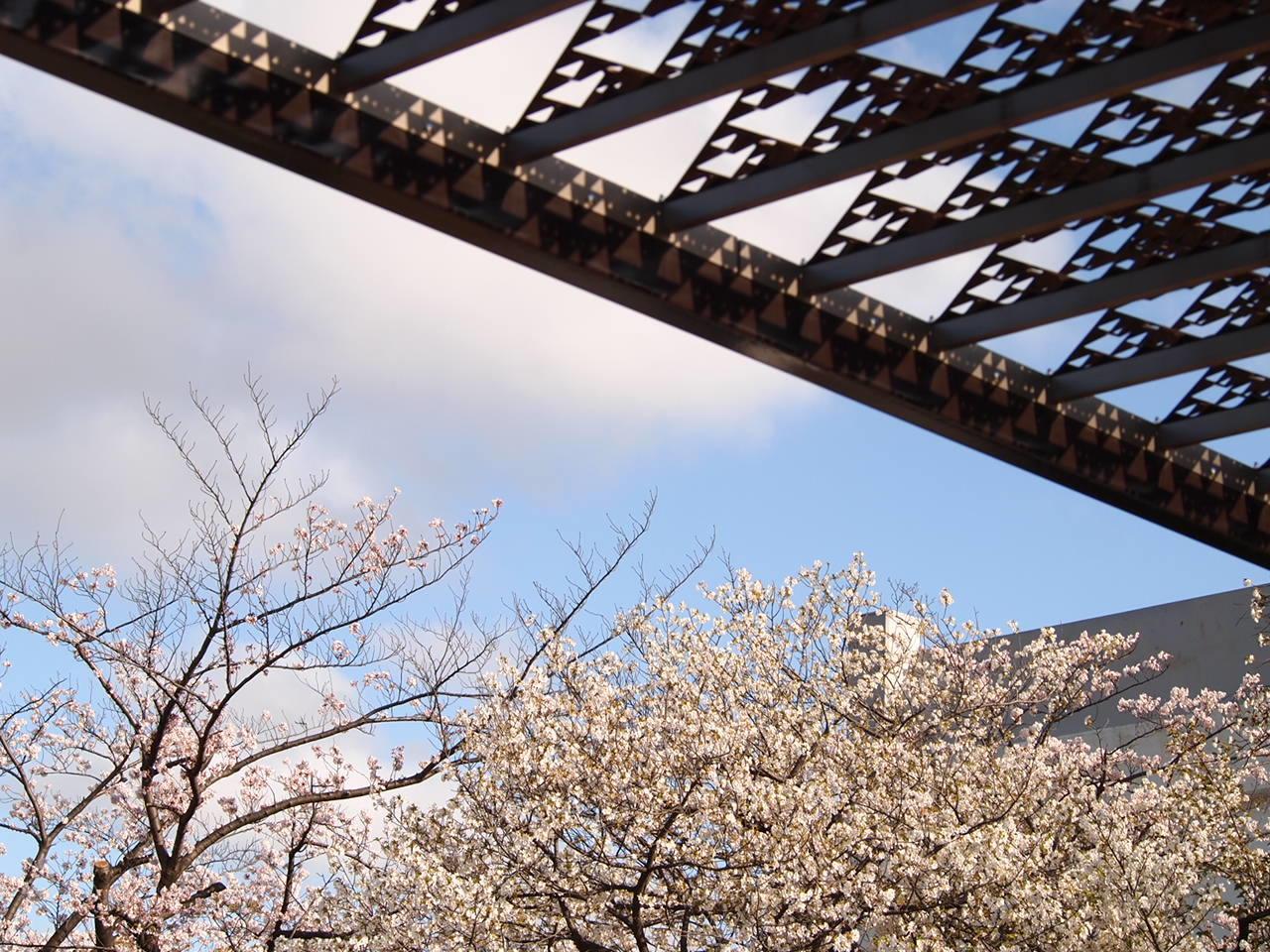 葛飾区小菅公園の春  1。_a0214329_16053350.jpg