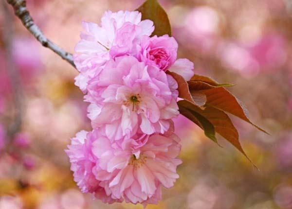 4月22日  例会_b0337729_22255712.jpg
