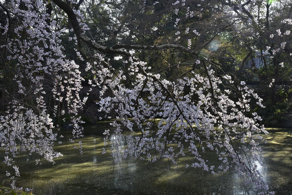 京都初日、Ⅱ_e0367330_2117774.jpg