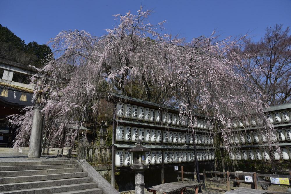 京都初日、Ⅱ_e0367330_21212546.jpg