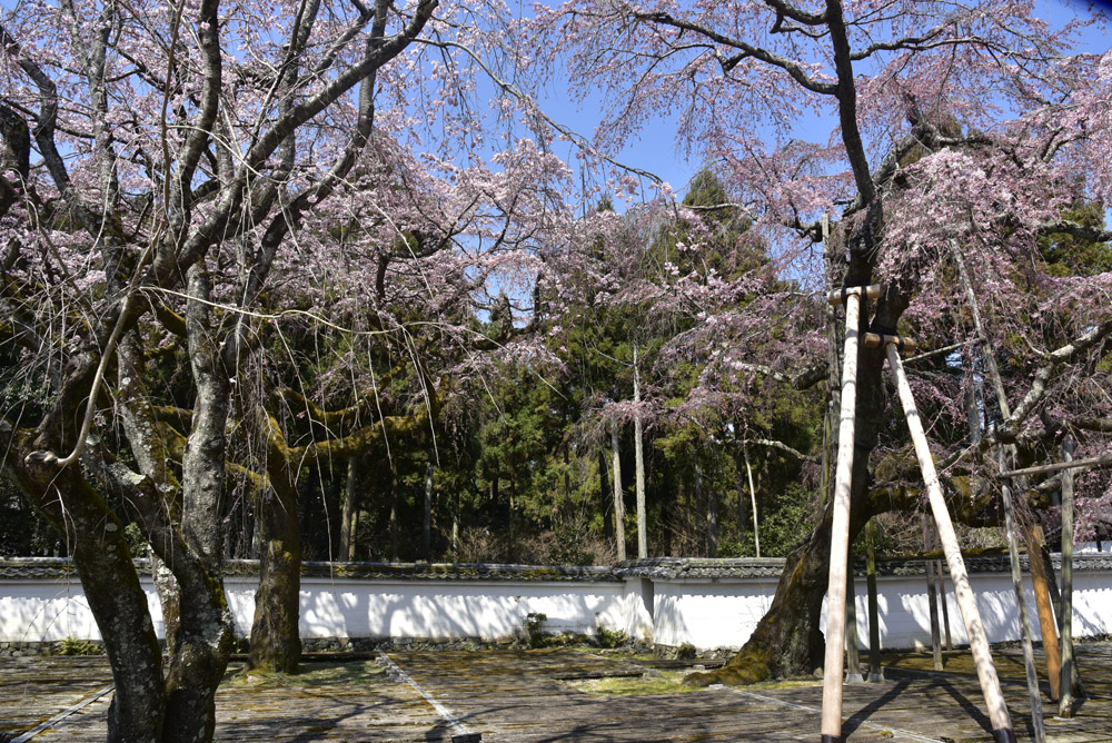 京都初日、Ⅱ_e0367330_21243933.jpg
