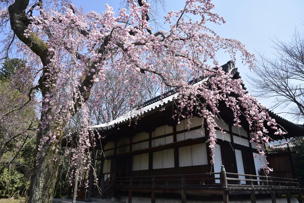 京都初日、Ⅱ_e0367330_21265148.jpg