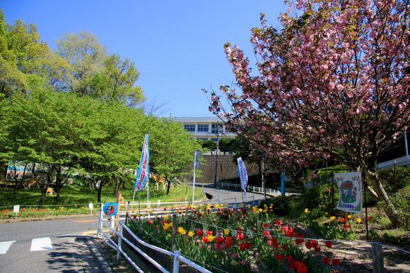 ほのぼの動物園と花の園_e0155240_1650312.jpg