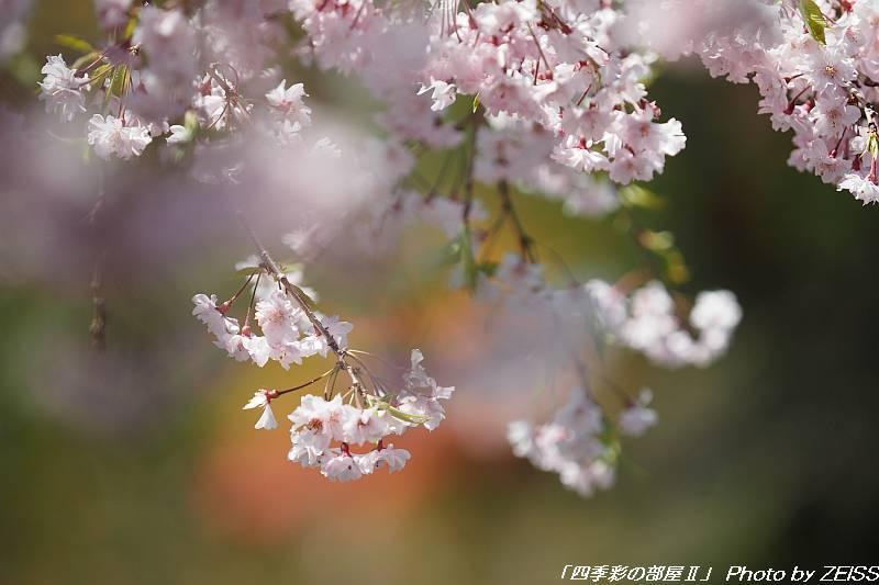 城峯山で桜とツツジを愛でる-1-_d0358854_21493458.jpg