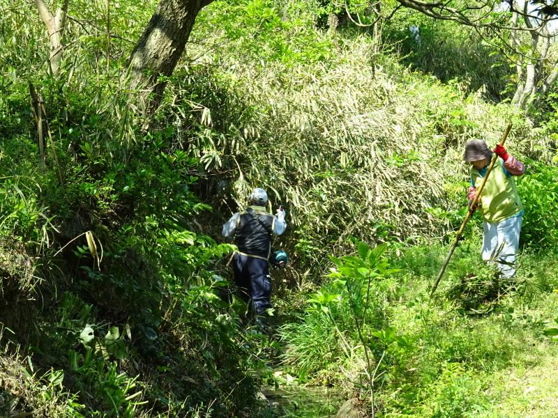 急斜面の笹刈り・・・うみべの森_c0108460_21082860.jpg