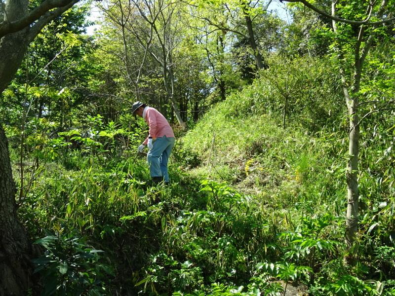 急斜面の笹刈り・・・うみべの森_c0108460_21093242.jpg