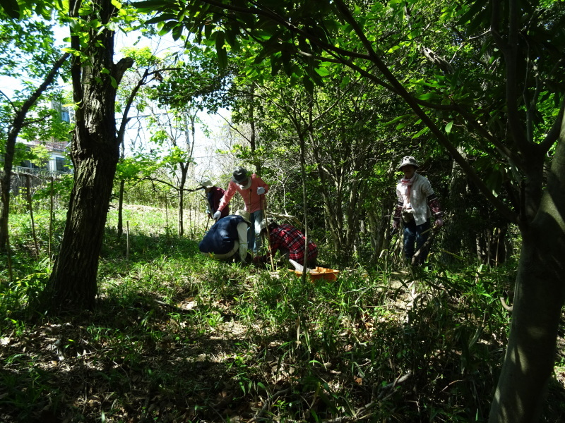 急斜面の笹刈り・・・うみべの森_c0108460_21100900.jpg
