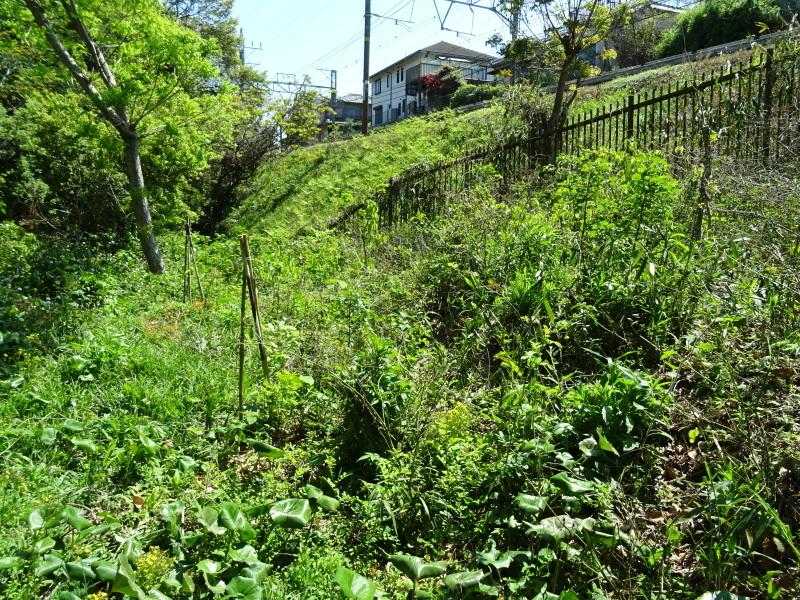 急斜面の笹刈り・・・うみべの森_c0108460_21101254.jpg