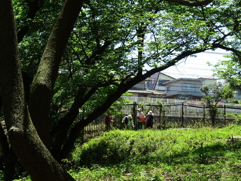 急斜面の笹刈り・・・うみべの森_c0108460_21112709.jpg