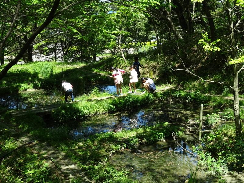 急斜面の笹刈り・・・うみべの森_c0108460_21113242.jpg