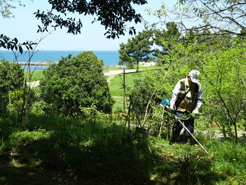 急斜面の笹刈り・・・うみべの森_c0108460_21120018.jpg
