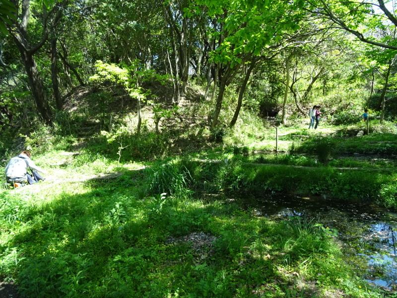 急斜面の笹刈り・・・うみべの森_c0108460_21145336.jpg