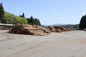 阿蘇小国町へ森林ツアーに行ってきました♪_b0112371_165240100.jpg
