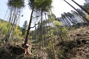 阿蘇小国町へ森林ツアーに行ってきました♪_b0112371_17859100.jpg