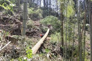 阿蘇小国町へ森林ツアーに行ってきました♪_b0112371_1792039.jpg