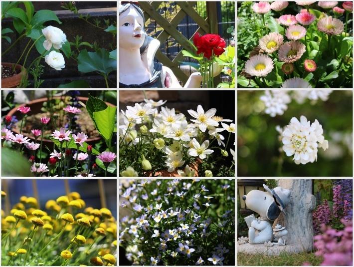 今日はのんびり、ご近所さんのお庭で花を見て、さくらも大も我が家のようにくつろいでね( *´艸`)クスクス_b0175688_20192083.jpg