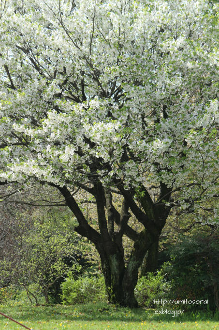 桜咲く公園_b0324291_19272808.jpg
