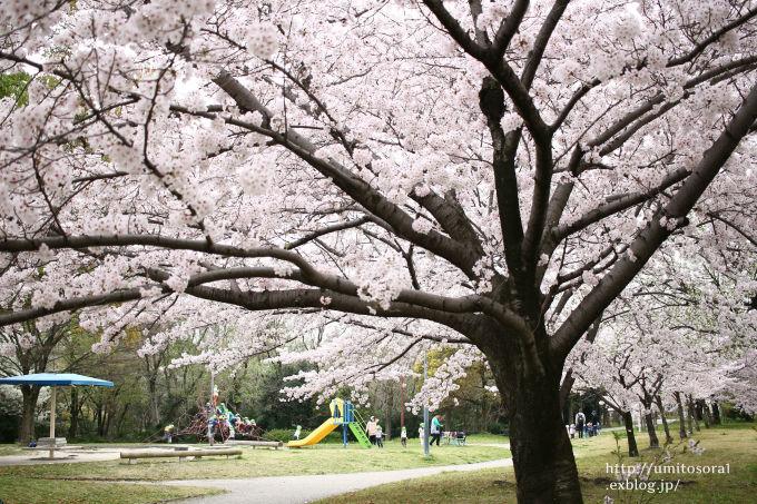 桜咲く公園_b0324291_19273081.jpg