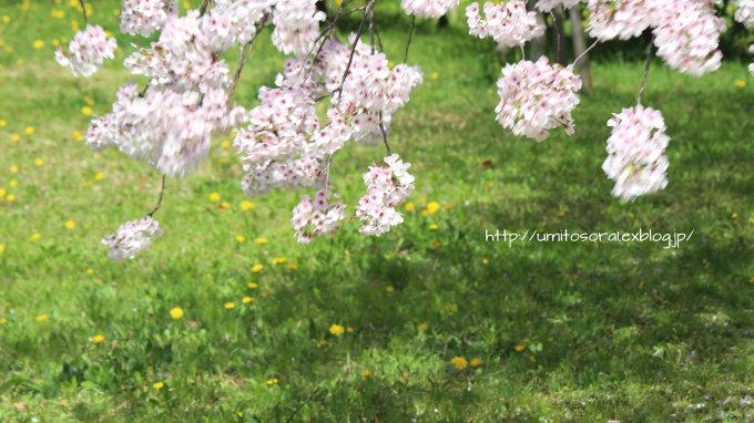 桜咲く公園_b0324291_19273375.jpg