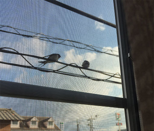 燕が来た&はっちゃんと遊ぶ&マッサージチェア争奪戦(動画)_d0071596_21432453.jpg