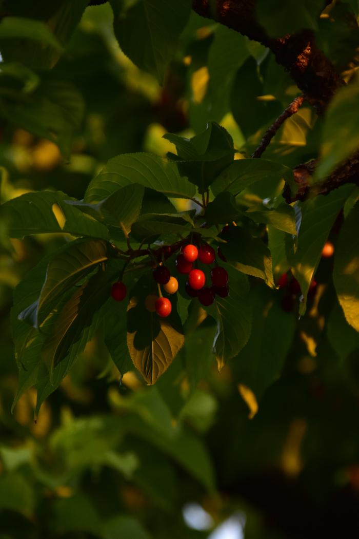 オレンジの朝、青い空、ちょっと寒くてはなちゃんごきげん♡_c0049299_21595104.jpg