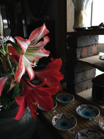 赤い実と花と_c0176406_20224740.jpg