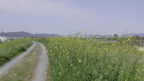 4/22(土) 三島江 菜の花 & レンゲ畑 散策〜_a0059812_22185431.jpg