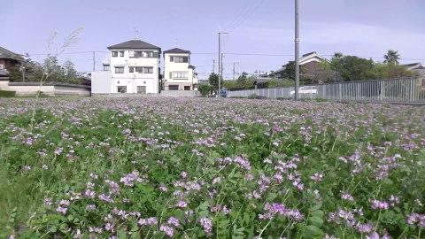 4/22(土) 三島江 菜の花 & レンゲ畑 散策〜_a0059812_22230171.jpg
