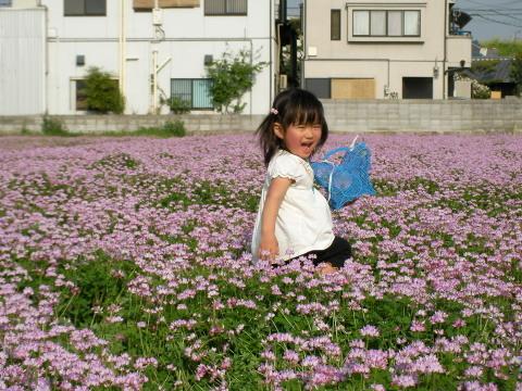 4/22(土) 三島江 菜の花 & レンゲ畑 散策〜_a0059812_22243230.jpg