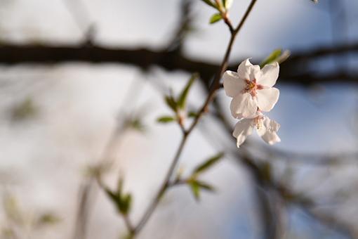 とりとめなくささやかに春_b0259218_01595515.jpg