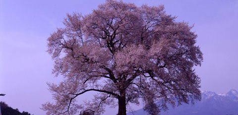 桜を巡りて・・北へ_a0072620_13554993.jpg