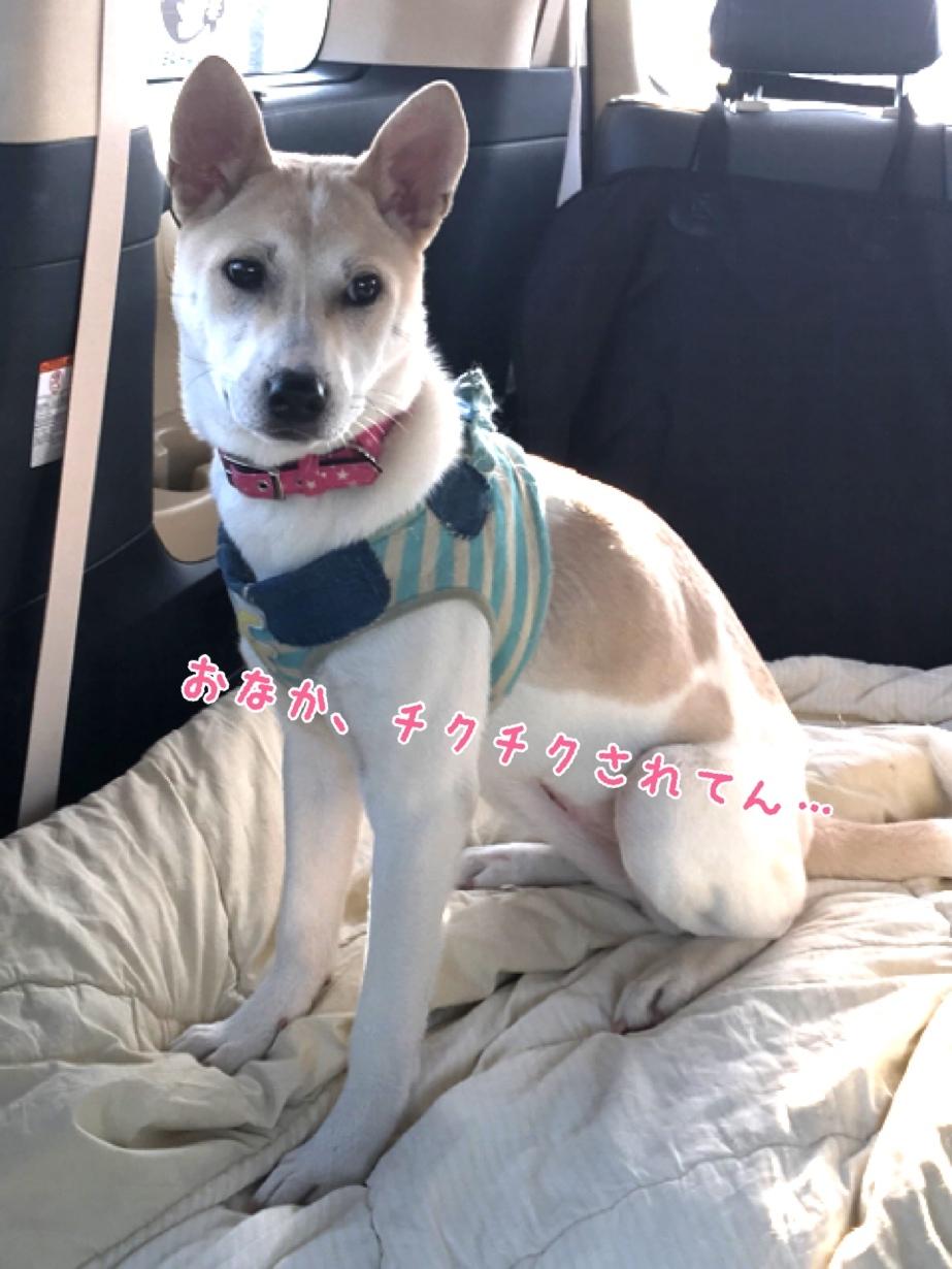 しょーゆ幸せ報告_b0207320_13381353.jpg