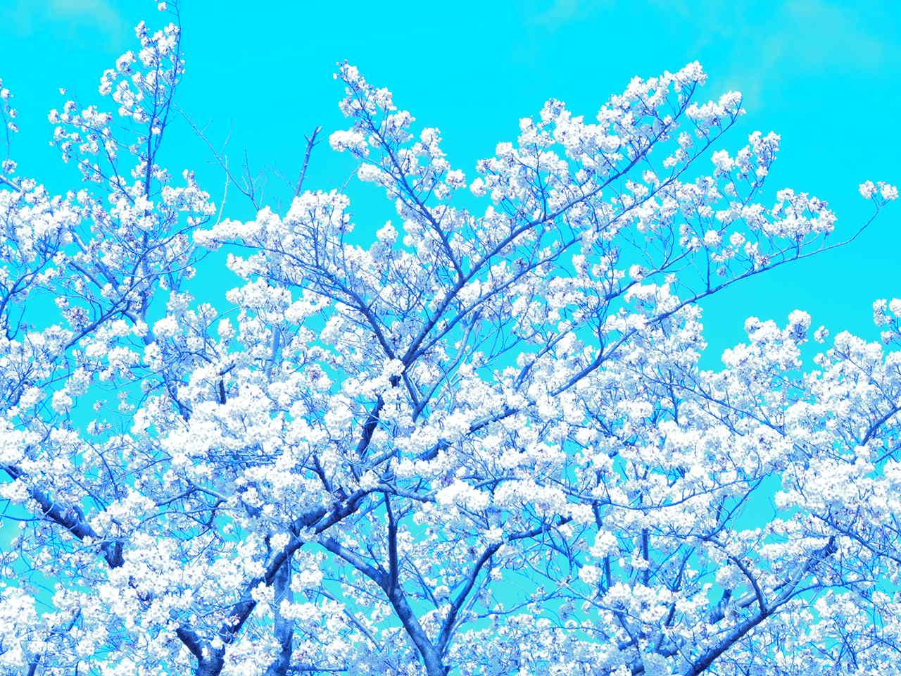葛飾区小菅公園の春 2。_a0214329_14292311.jpg