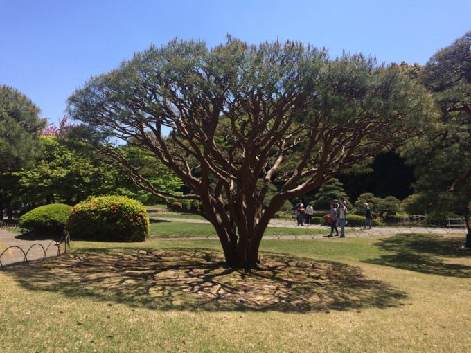 美しい桜の木の下には…_d0347031_11404619.jpg