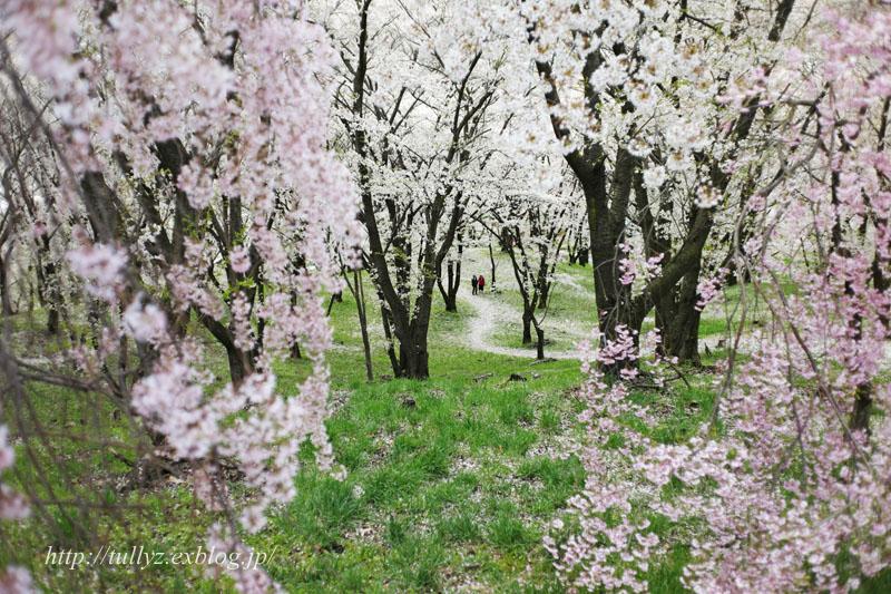 弘法山(1)_d0108132_2334922.jpg