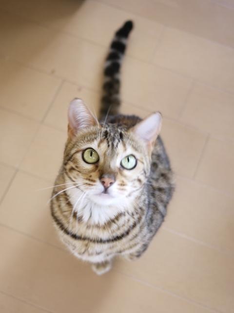 猫のお留守番 ミツコちゃん編。_a0143140_21375847.jpg