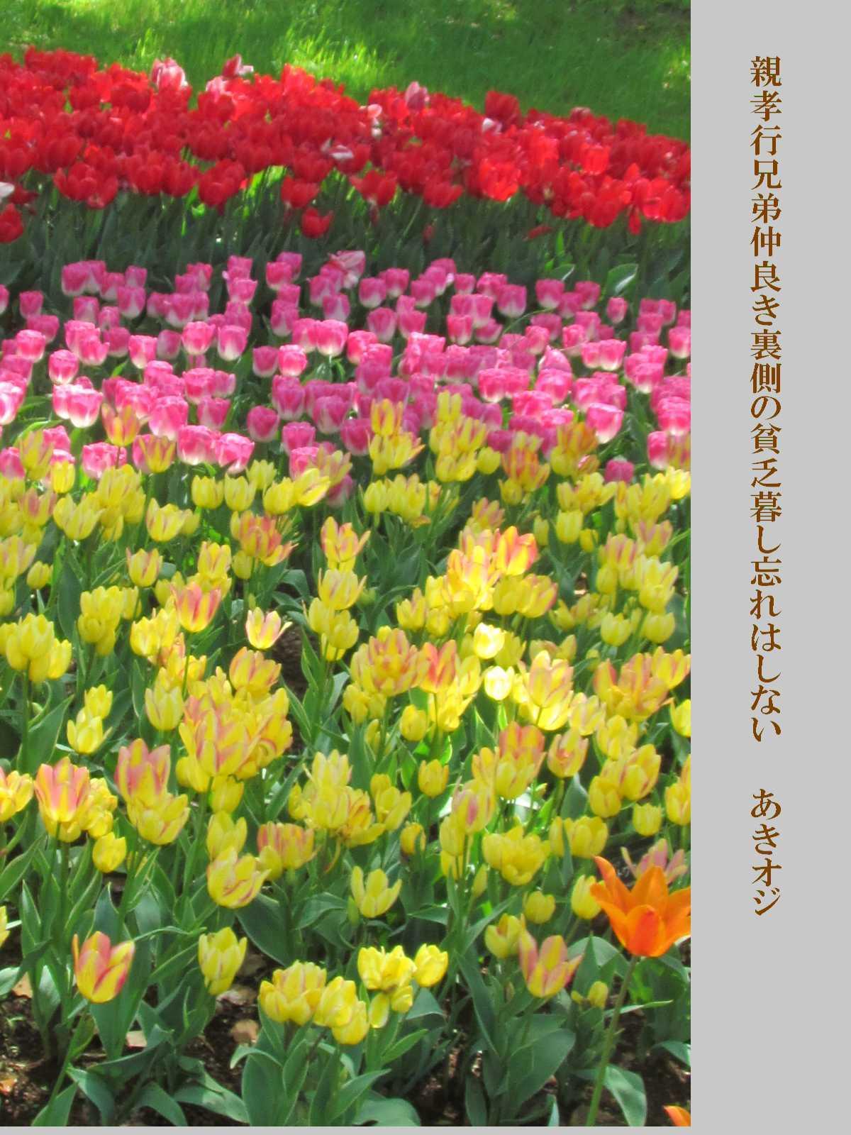 f0117041_16473668.jpg