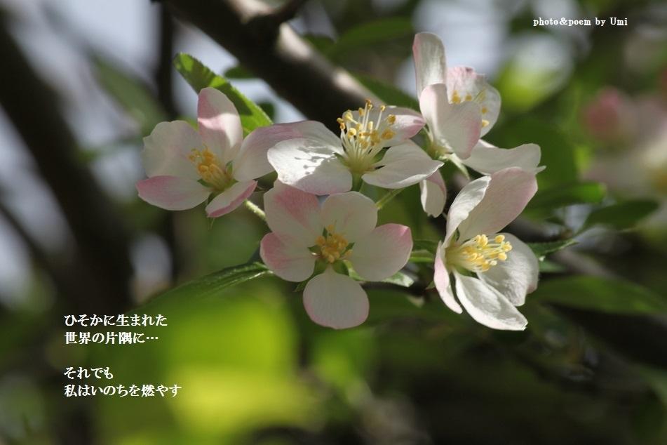 f0351844_09541425.jpg