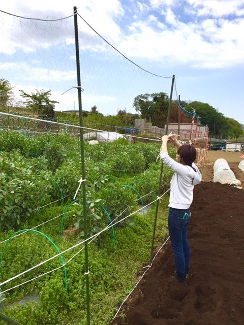 今日からはインゲン豆の畝作りです・・_c0222448_14111840.jpg