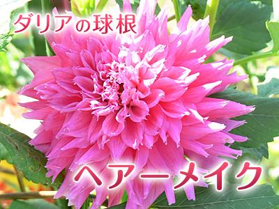 a0254656_20140949.jpg